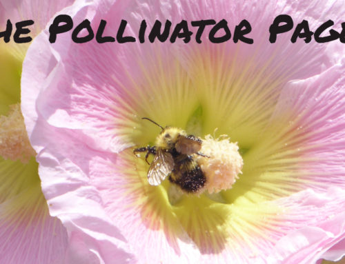 Food from Our Friends – Pollinator Recipes