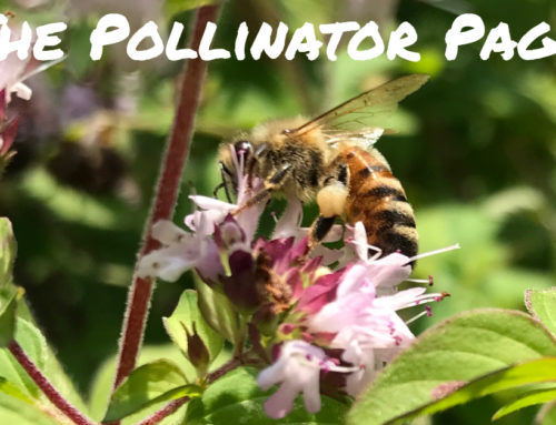 Pollinator Activities for Kids
