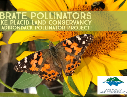 Celebrate National Pollinator Week with Lake Placid Land Conservancy