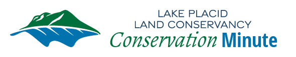 conservation-minute-header
